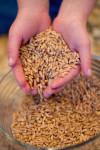 Great Grains